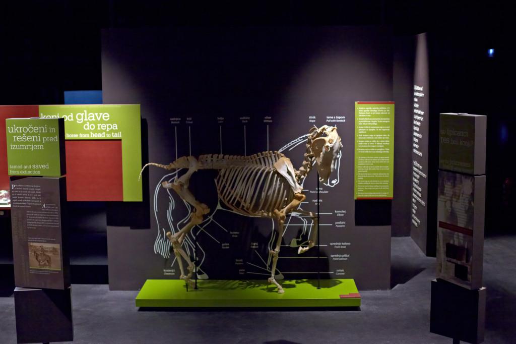 Museo de Lipica