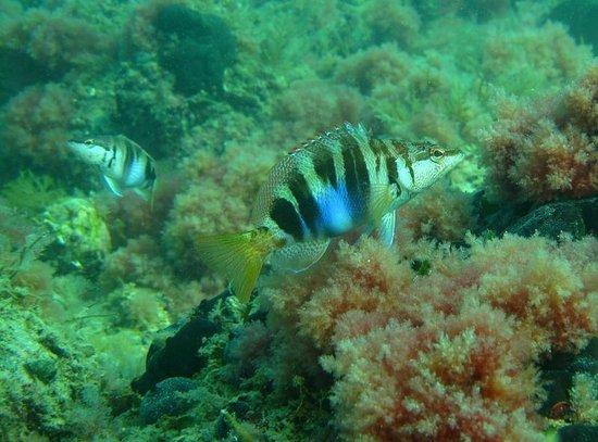 piran-divers